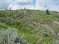 Grass, Sagebrush and Spruce Among the Barren Valley Slopes - panoramio.jpg