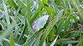 Grass (133633497).jpeg