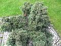 Green-grayish plant.JPG