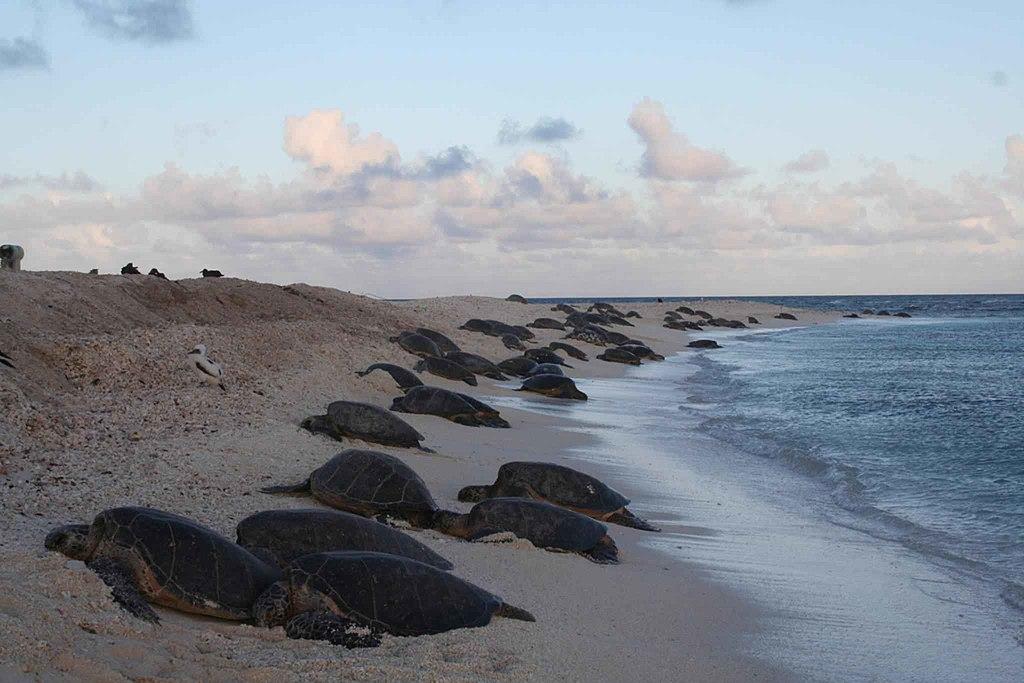 Turtle Beach Px Presets