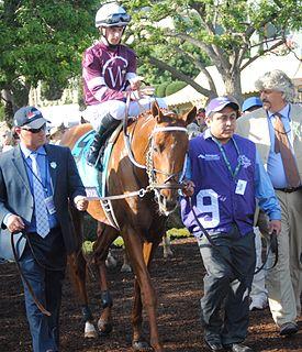 Gun Runner (horse) American Thoroughbred racehorse