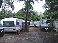 Gypsy encampment, in Haldon Forest - geograph.org.uk - 1458669.jpg