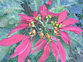 HK 元朗公園 Yuen Long Park 31 red flowers.jpg