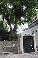 HK Sheung Wan New Street banyan tree 樂善堂梁銶琚書院 Lok Sin Tong Leung Kau Kui College April 2018 IX2 01.jpg