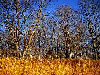 Hickory Run State Park - Image: HRSP Ecotone