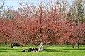 Hanami au Parc de Sceaux (47501613222).jpg