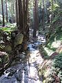 Hare Canyon Creek (8613083124).jpg