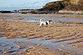 Harlyn Bay beach scene - geograph.org.uk - 1292461.jpg