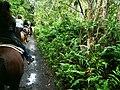 Hawaii Big Island Kona Hilo 215 (7025121723).jpg