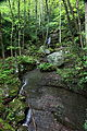 Hawks-nest-waterfall-wv - West Virginia - ForestWander.jpg