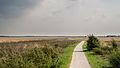 Heideveld Dwingelderveld 1.jpg