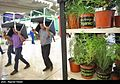 Herbs at Medicinal Plants and Traditional Medicine exhibition in Iran's capital 09.jpg