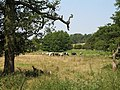 Herd of Cows - geograph.org.uk - 196650.jpg