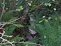 Hidden stream - geograph.org.uk - 73062.jpg