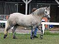 Highland Pony.jpg