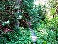 Hiking trails in Trail area.jpg