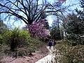 Hillwood Gardens in April (17409824938).jpg