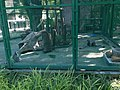 Hong Kong Zoological and Botanical Gardens 11.jpg