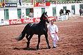 HorseTexcoco12.JPG