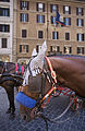 Horse drawn carriages in Piazza Spagna, Rome - 2466.jpg