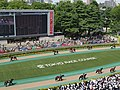 Horse racing @ Tokyo Race Course @ Fuchu (14117619241).jpg