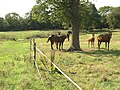 Horses near Lower Barn Farm - geograph.org.uk - 252762.jpg