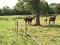 Horses near Lower Barn Farm - geograph.org.uk - 252762.jpg