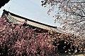 Horyuji Temple 10.JPG