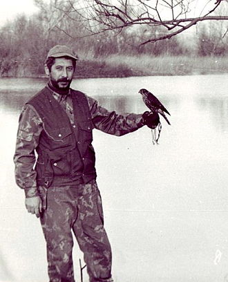 Merlin (bird) - Hunter with trained merlin, Jandari Lake, Georgia, November 1979