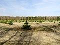 Huta-Mezhyhirska forest nursery2.JPG