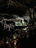 File:Illuminated forest near Mikami Shrine 2.jpg