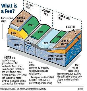 Fen type of wetland