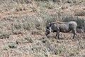 Impressions of Serengeti (61).jpg