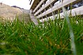 In the grass (3004593330).jpg