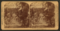 In the heart of a banana plantation, Hawaiian Islands, from Robert N. Dennis collection of stereoscopic views 2.png