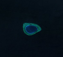 Investigator Northeast Shoal, Spratly Islands.png