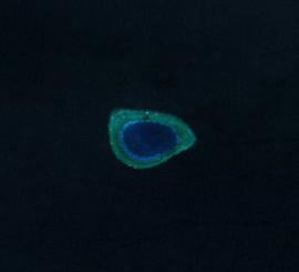 Investigator Northeast Shoal, Spratly Islands.png