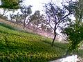 Irrigation Sprinkler Bhoodha Ka Bas.jpg