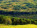 It's All Green - panoramio.jpg