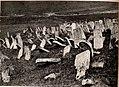 Jüdischer Friedhof in Narajow (BildID 15530018).jpg