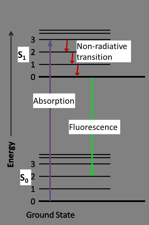 Jablonski Diagram of Fluorescence Only