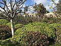 Japanese Friendship Garden (Balboa Park, San Diego) 4 2016-05-14.jpg