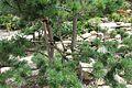 Japanese garden @ Fort d'Issy-les-Moulineaux (34728555900).jpg