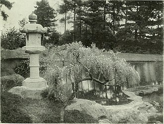 Ballad of Sir Frankie Crisp (Let It Roll) - Japanese stone lantern and dwarf wistaria at Friar Park in the late 1890s, during Crisp's time as owner