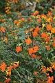 Jardim Botânico da Madeira DSC 0383 (14697495944).jpg