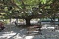 Jardim Praca do Principe Real - panoramio (1).jpg
