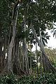 Jardin Botanico (400971609).jpg