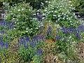 Jardin du Mail, Angers, Pays de la Loire, France - panoramio.jpg