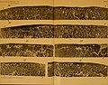 Journal of morphology (1909) (14770485141).jpg