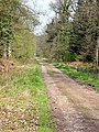 Just off the family cycle trail, Forest of Dean - geograph.org.uk - 164077.jpg